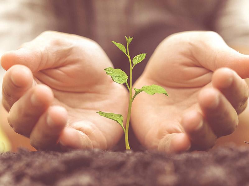 reflexion ethique mains protegeant une plante